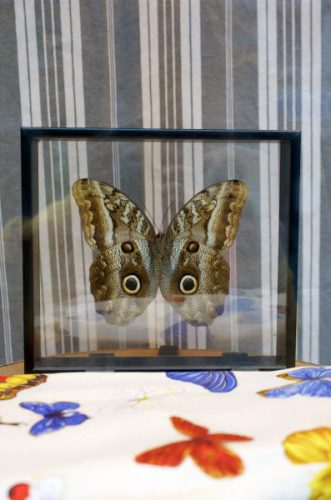 "Display "" Minute Papillon "" – August 31th 2016"